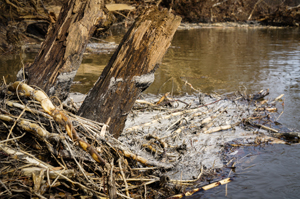 Coal Ash on the Dan River - Courtesy of Waterkeeper Alliance