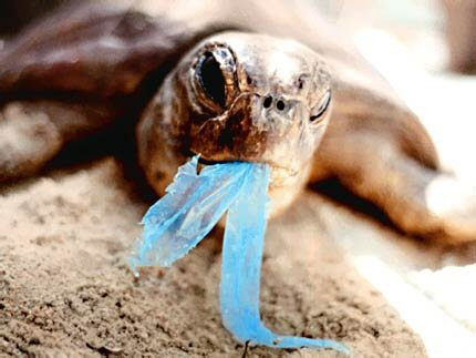 turtle_eating_plastic_bags.jpg