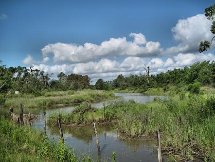 wetlands and clouds