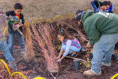 D'Abate rain garden_Rhode Island_Green Infrastructure_Photo by Dorothy Campbell