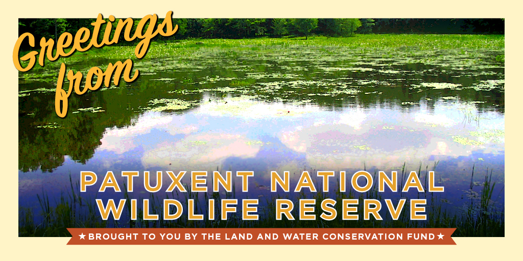 Patuxent National Wildlife Reserve