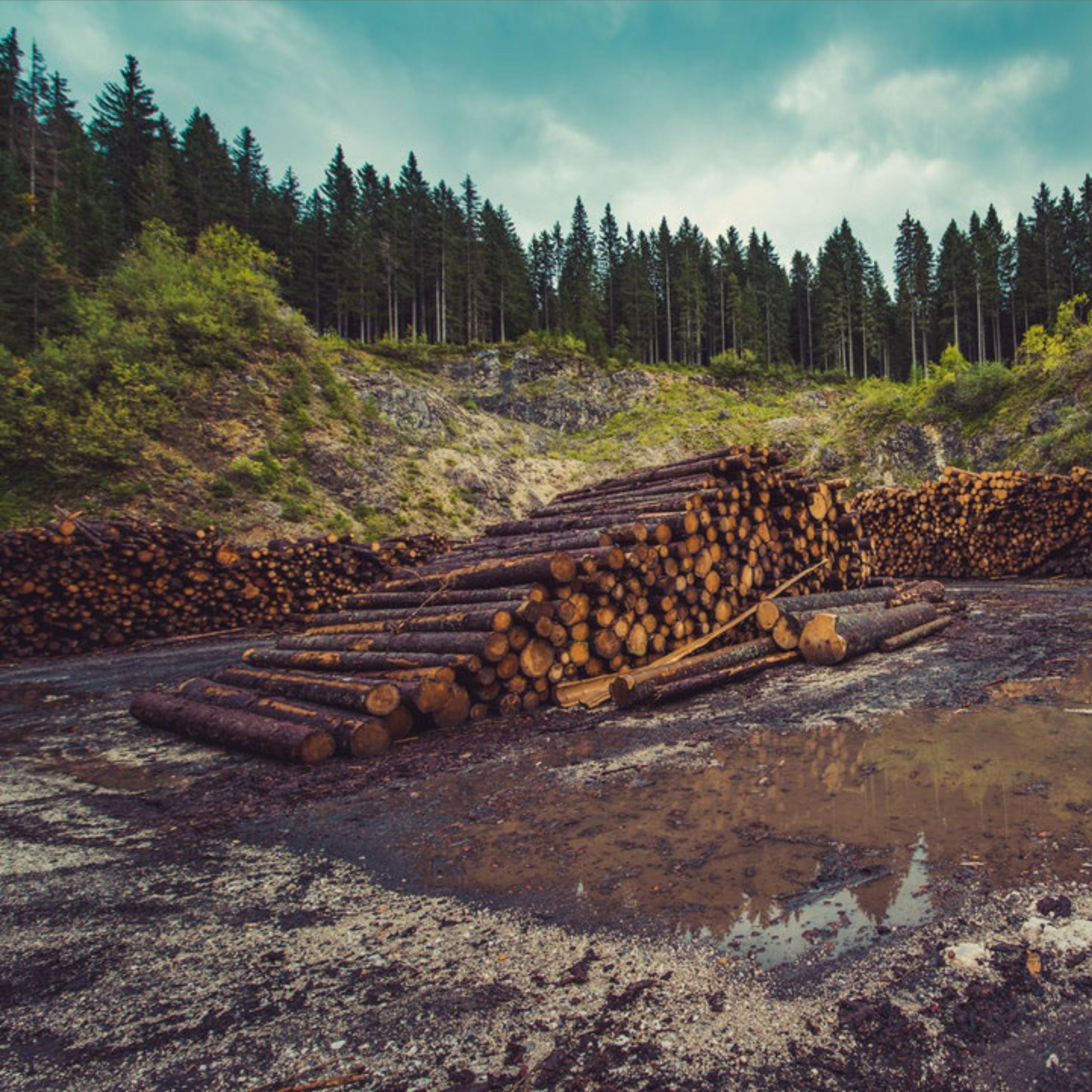 ReThink Disposable_Trees_Blog_Adobe Spark Image