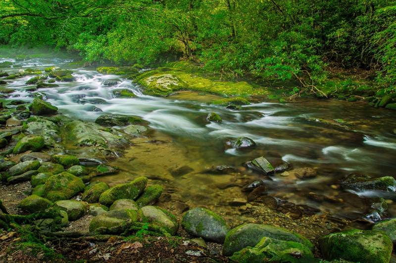 Smoky Mountain stream. Photo credit: ehrlif / Shutterstock