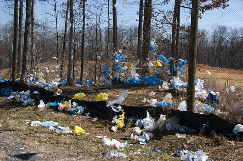 Plastic bags littering trees