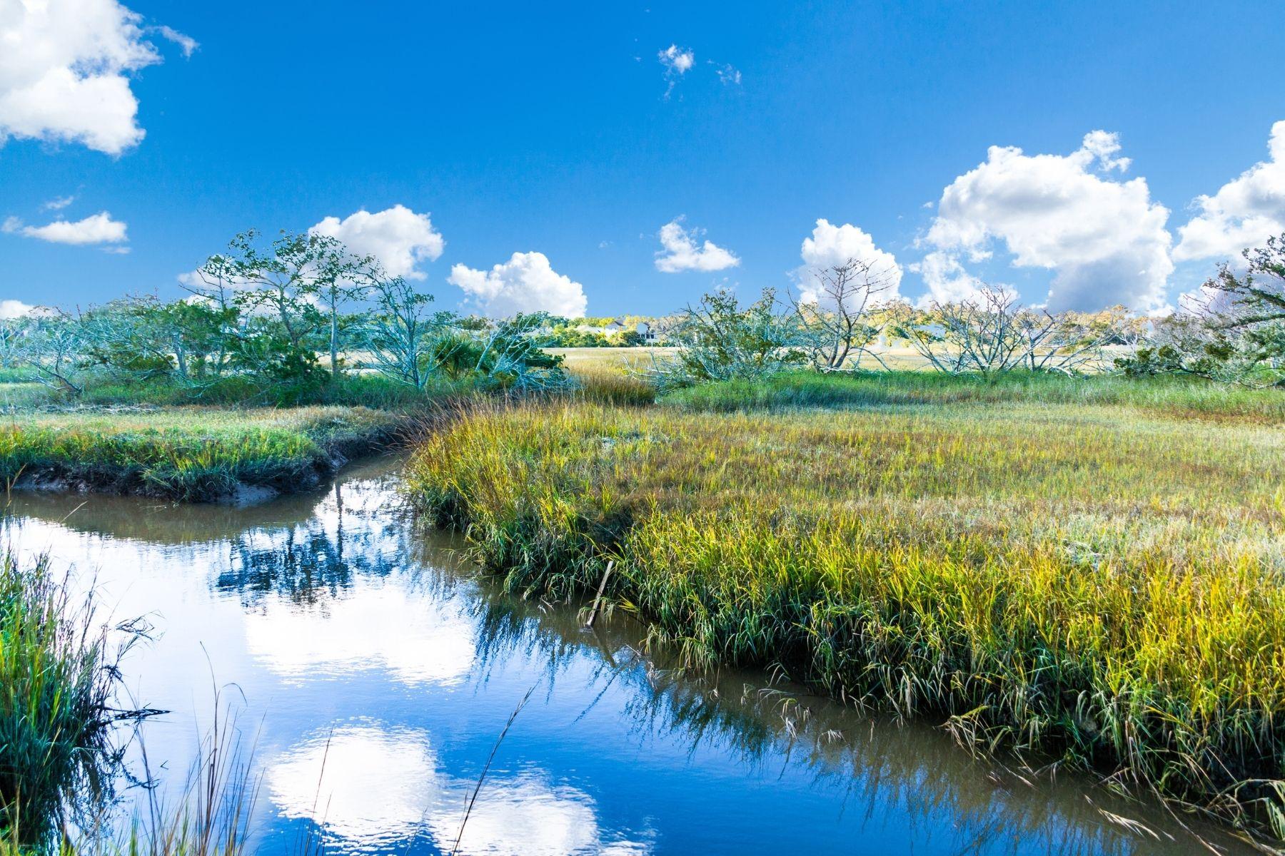 national_cleanwater_wetlands.jpg