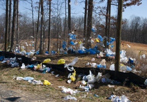 Waste_Plastic_Bags_National_Plastic_Bags_Littering_forest.jpg