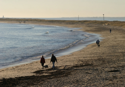 Walking dogs on a beach - Westerly RI. Photo credit: Larry St. Pierre / Shutterstock