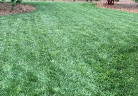 Natural lawn in Minnesota