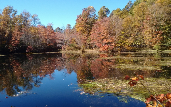 Forest in Fall along river