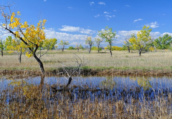 March at Cherry Creek State Park - Credit: Sharon / Creative Commons
