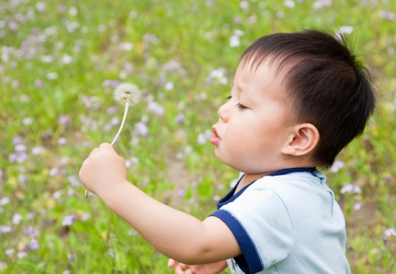 Pesticide Kid Dandelion Canva