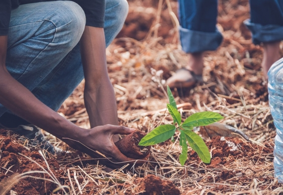 a person planting a young tree sapling